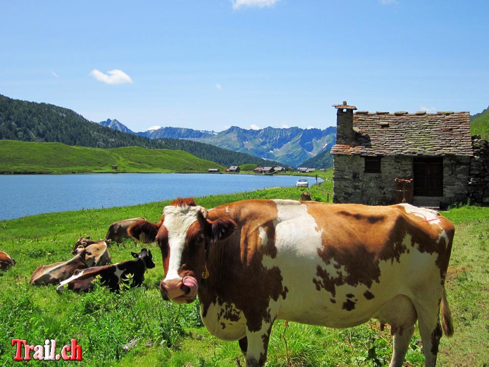[Bild: lago-cadagno_16-07-2012_img_4061.jpg]