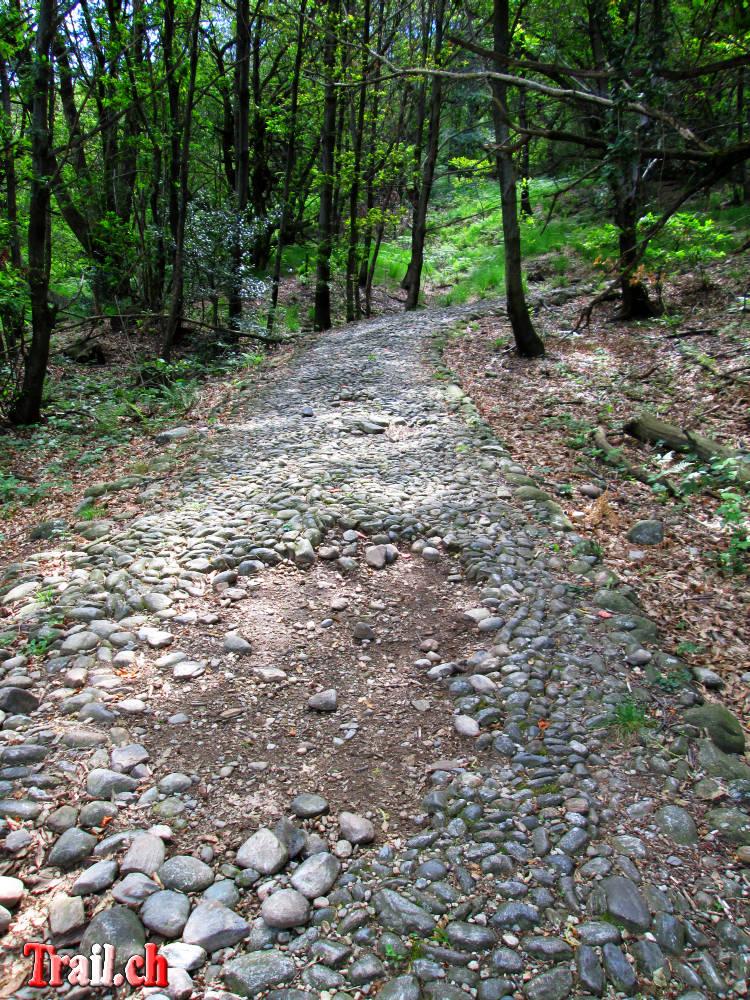 [Bild: monte-tamaro_alpe-di-neggia_24-06-2013_img_2008.jpg]