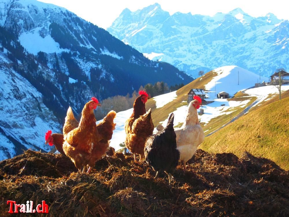 [Bild: schaechental_05-02-2011_img_0036.jpg]